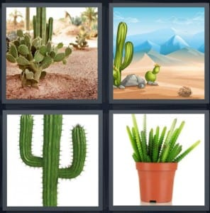 Desert, Mountains, Texas, Plant